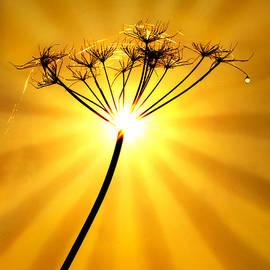 Adrian Campfield - Warm Radiance