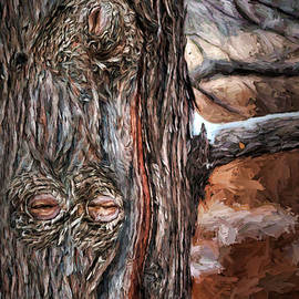 Nikolyn McDonald - Watcher in the Woods - Tree with Knothole Eyes - Pareidolia