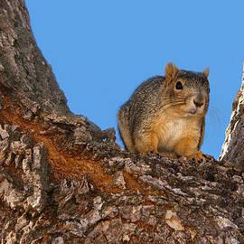 Nikolyn McDonald - Watching You Watching Me - Squirrel