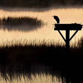Jo Ann Tomaselli - Watchtower Heron Sunrise Sunset Image Art