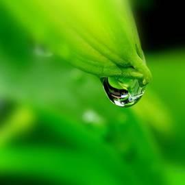 Nick Kloepping - Water Bead