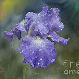 Angela A Stanton - Water Drops on Blue Bearded Iris