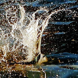 Colette V Hera  Guggenheim  - Water Flash