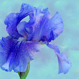 Nikolyn McDonald - Water Iris
