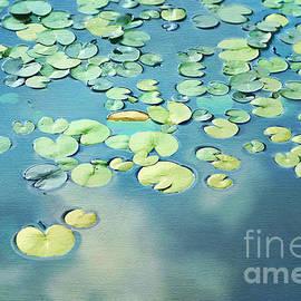 Darren Fisher - Water Lilies