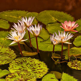 Greg Kluempers - Water Lilies IMG_6388