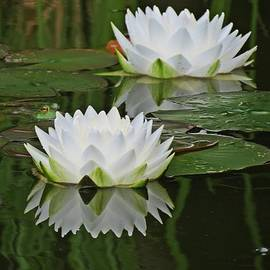 MTBobbins Photography - Water Lilies with Frog