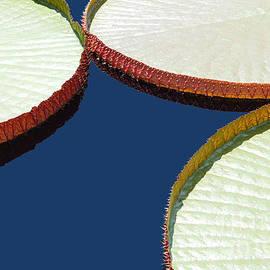 Joseph J Stevens - Water Lilly Platters
