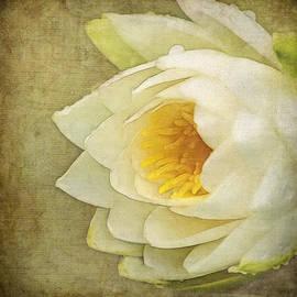 Jordan Blackstone - Water Lily Art - Dreams Are Forever