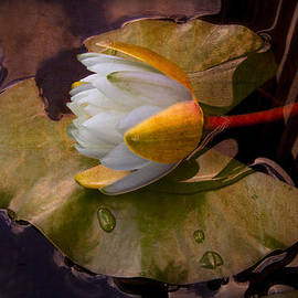 Debra and Dave Vanderlaan - Water Lily