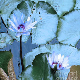Ann Johndro-Collins - Peaceful Water Lily
