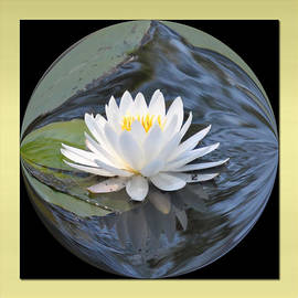 Michele Kaiser - Water Lily
