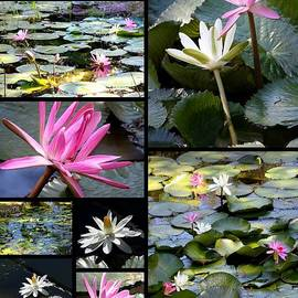 Carol Groenen - Water Lily Pond Collage