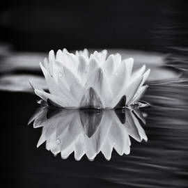 Tim Gainey - Water Lily Reflection