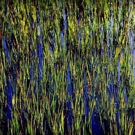Karen Wiles - Water Reeds