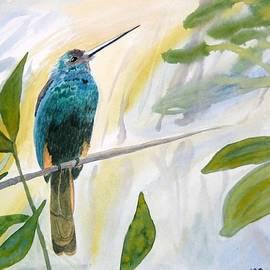 Cascade Colors - Watercolor - Jacamar in the Rainforest