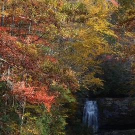 Patricia Twardzik - Waterfall Through the Forest