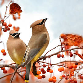 Nava  Thompson - When Waxwing Visit
