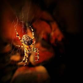 Sarah Pemberton - Web of the Yellow Spider