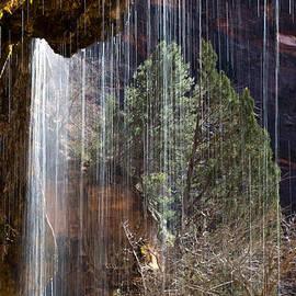 Eugenia Rey-Guerra  - Weeping Rock - Zion National Park