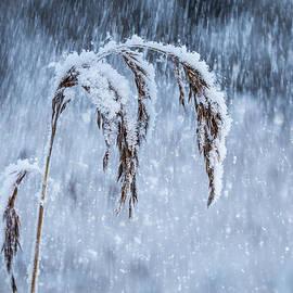Janne Mankinen - Weight of Winter