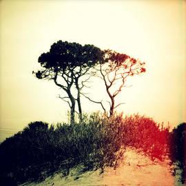 Chris Andruskiewicz - Weird Trees Sunset