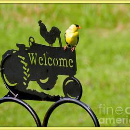 Linda Galok - Welcome