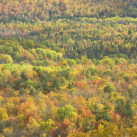 Keith Webber Jr - Weld Maine Fall Forest In Mount Blue State Park