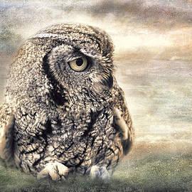 Barbara Manis - Western Screech Owl