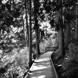 Elmar Langle - Westwood Lake Boardwalk