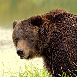 Shaleen Holmes - Wet Bear