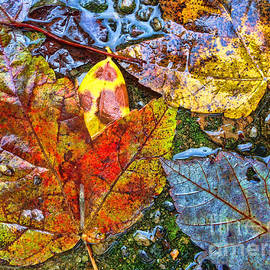 Todd Breitling - Wet Leaves
