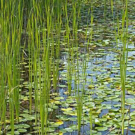 Ann Horn - Wetland Green