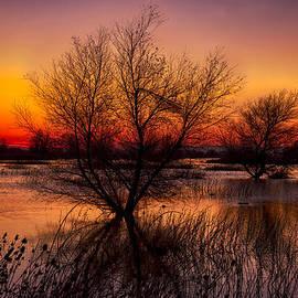 Kathleen Bishop - Wetlands Dawn
