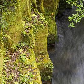 Bob Phillips - Whaiti-Nui-A-Toi Canyon Wall