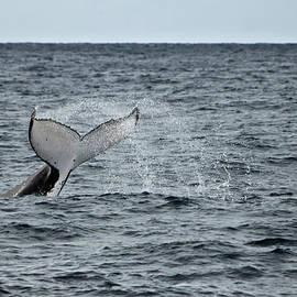 Miroslava Jurcik - Whale of a time