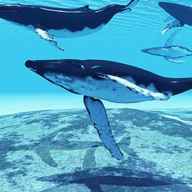Corey Ford - Whale Pod