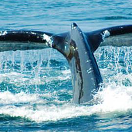 Ron Haist - Whale Tail 3