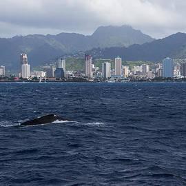 Georgia Mizuleva - Whale Watching in Honolulu Hawaii