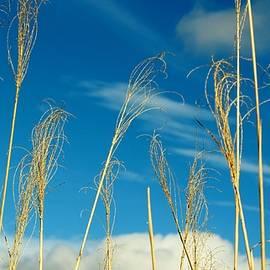 Cynthia Guinn - Wheat In The Sky