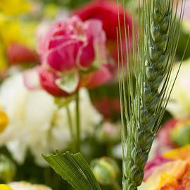 Meir  Jacob - Wheat Stalk In Buttercup Field