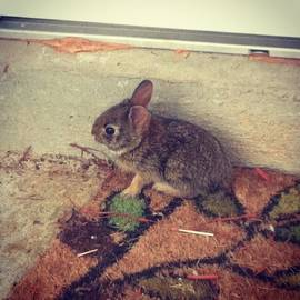 Cassandra Eisan - When Your Hunnie Finds A Bunny At Work