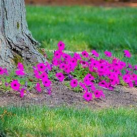 Sonali Gangane - Where Petunia Grows