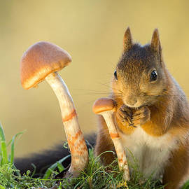 Geert Weggen - Whisper Mushroom