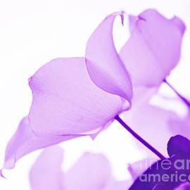 Arlene Carmel - Whisper Of Lavender