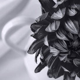 Jordan Blackstone - Whispered Beauty - Black and White Art