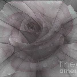 Elizabeth McTaggart - Whispering Rose