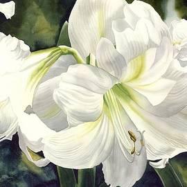 Alfred Ng - White Amarylilis