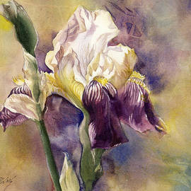 Alfred Ng - White And Purple Iris