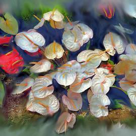 Usha Shantharam - White Anthurium radiating.
